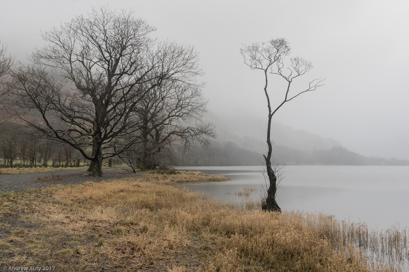 Buttermere Tree in Mist