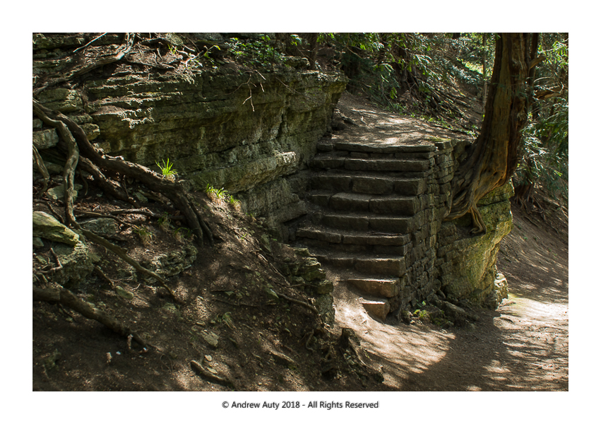 Fountains Abbey Steps in the Wood