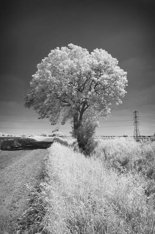 8 Infrared Tree